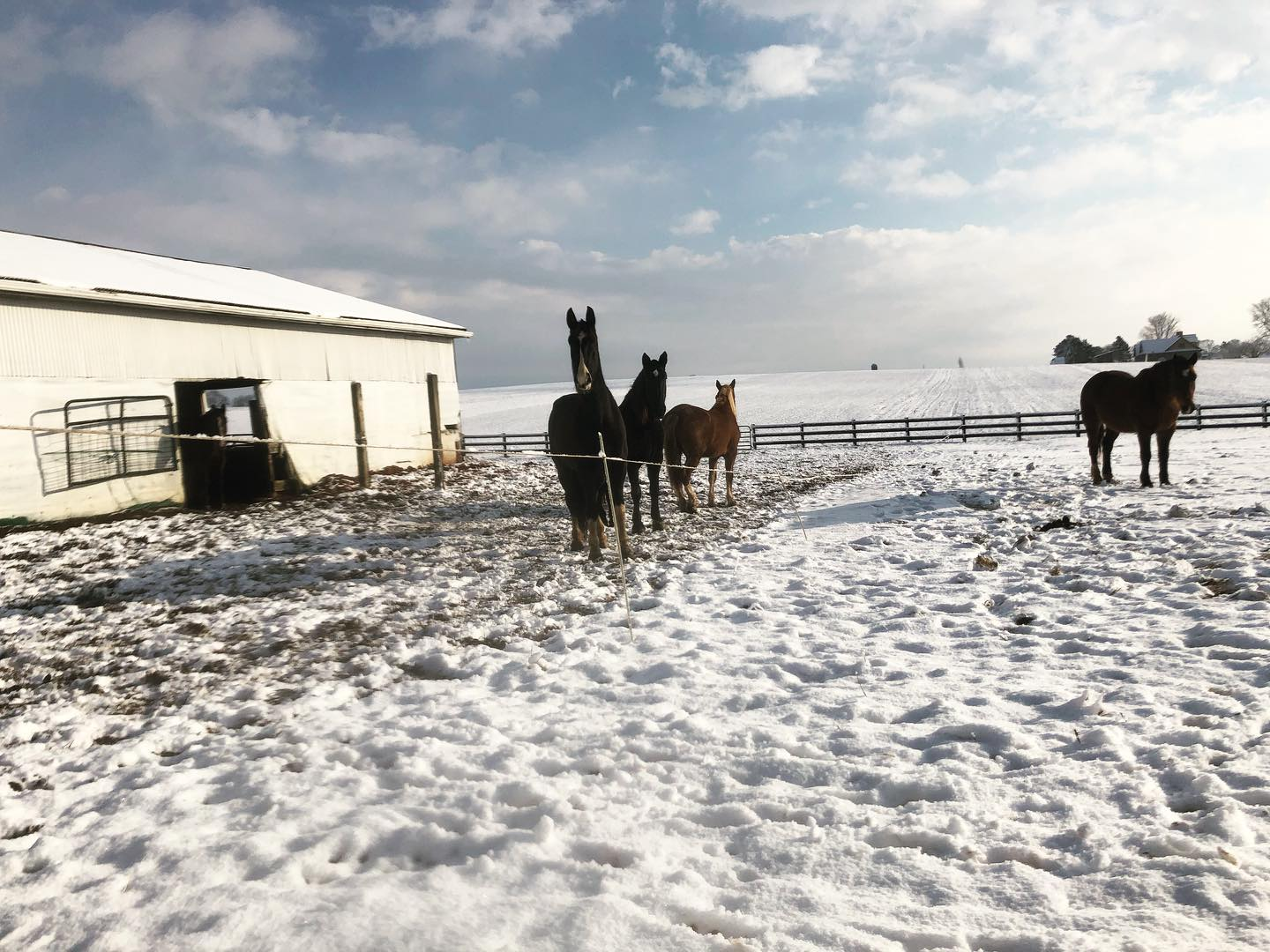 Snow Day for the Horses