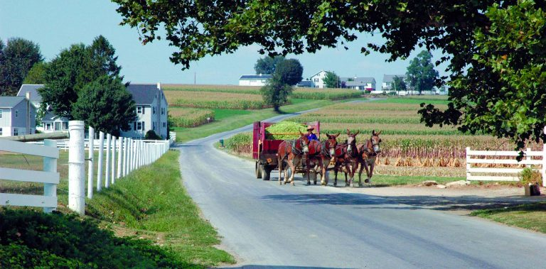 Farmer with Mules on the Road in Lancaster County, Pennsylvania