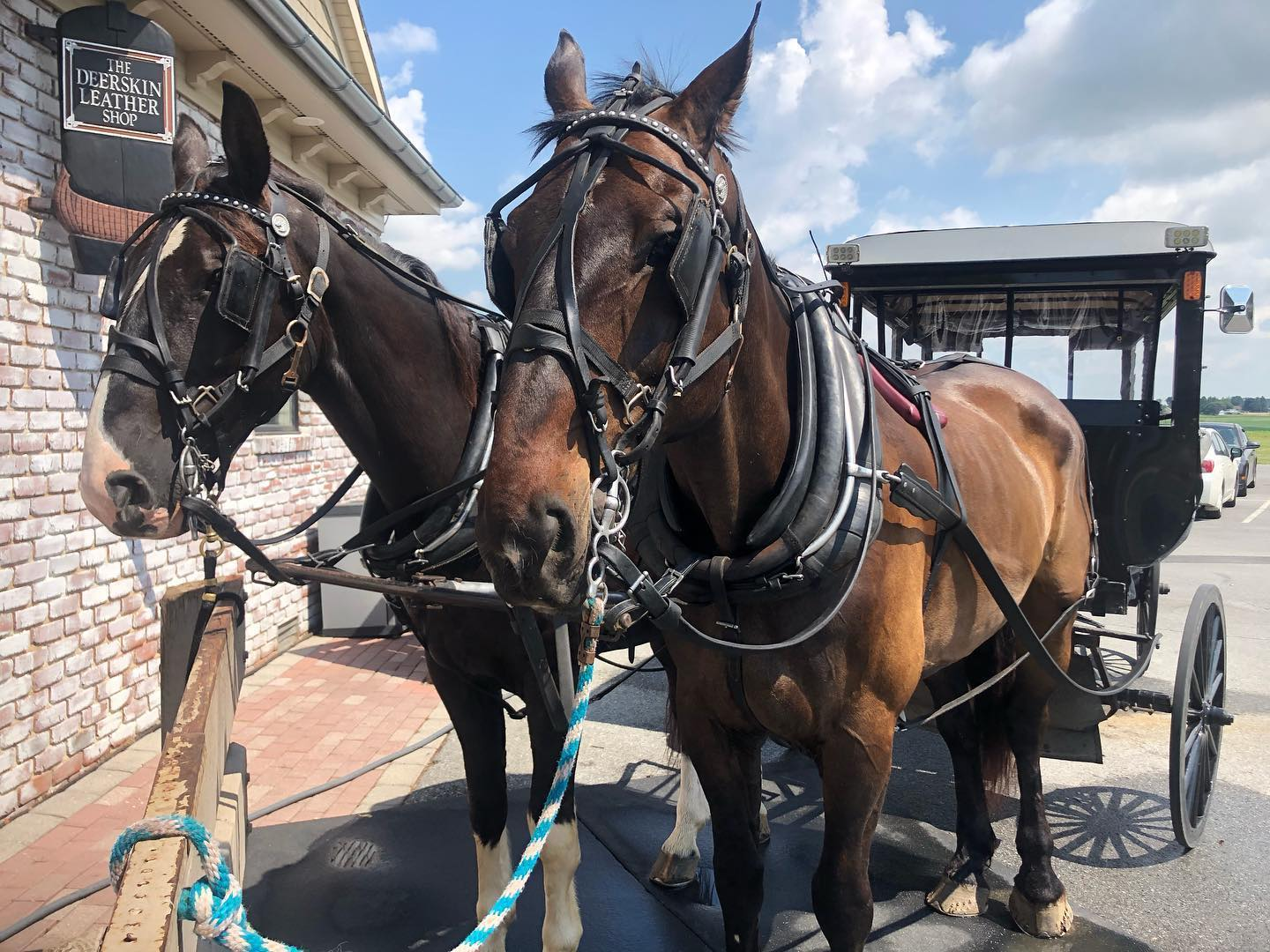 Horses and Buggy Tied to Post at AAA Buggy Rides