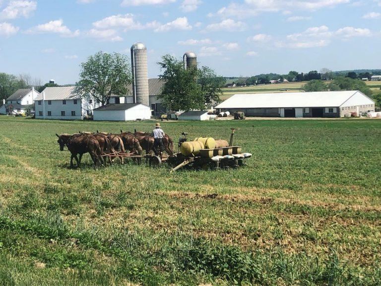 Amish Farmer Planting Corn